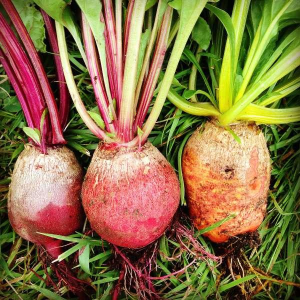 cu-vegetables1