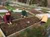Preparing the beds for early planting
